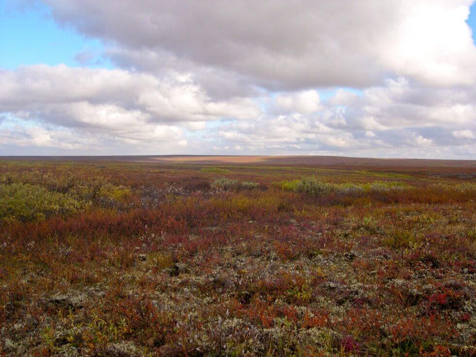 Tundra de Vorkuta, al norte de Rusia