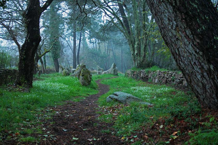Bosque Hechicera
